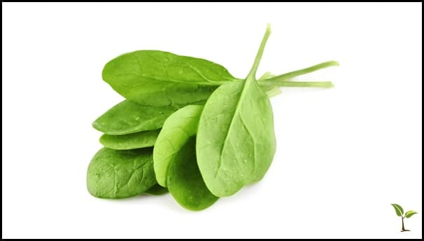 Spinach Image Edit