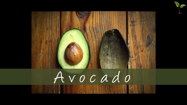 Avocado Border1