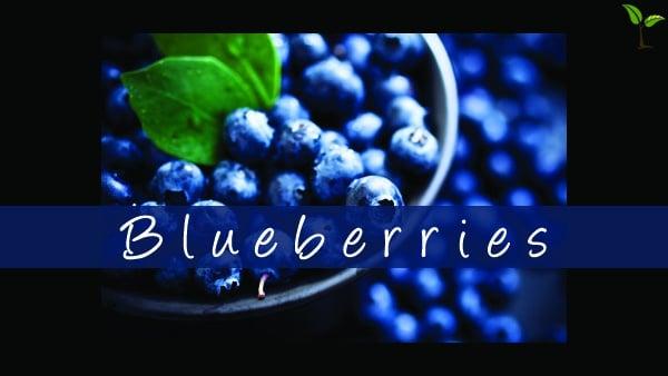 Blueberries Border1